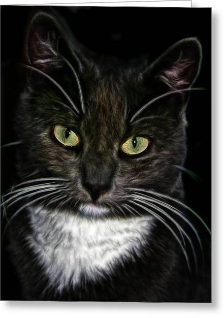 Superstition Drawings Greeting Cards - The cat  Greeting Card by FL collection