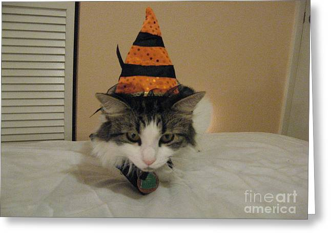 The Cat Is The Witch Greeting Card by Frederick Holiday