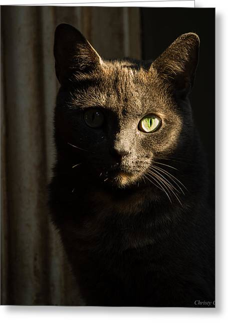 Statue Portrait Greeting Cards - The Cat Soul Stare Greeting Card by Christy Cox