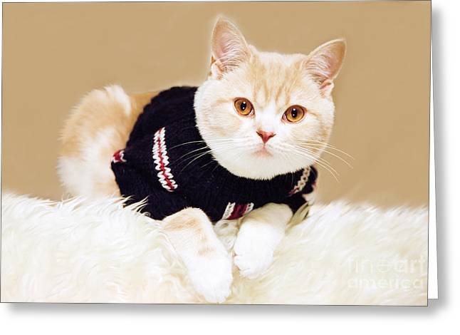 Domestic Pet Portraits.house Cat Greeting Cards - The cat wears sweater Greeting Card by Aiolos Greek Collections