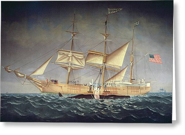 Sailing Ship Greeting Cards - The Catalpa With Whale Oil On Canvas Greeting Card by American School