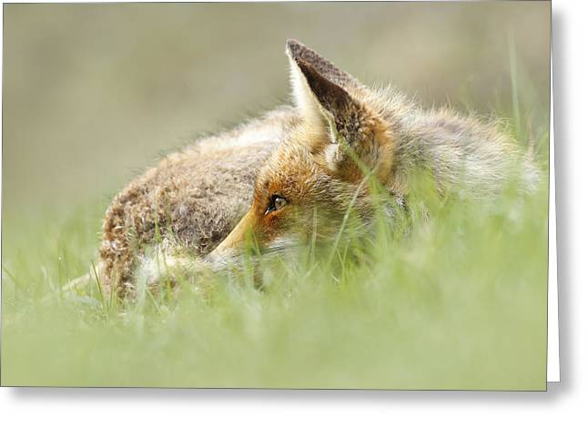 Vulpes Vulpes Greeting Cards - The Catcher in the Grass II   Red Fox Greeting Card by Roeselien Raimond