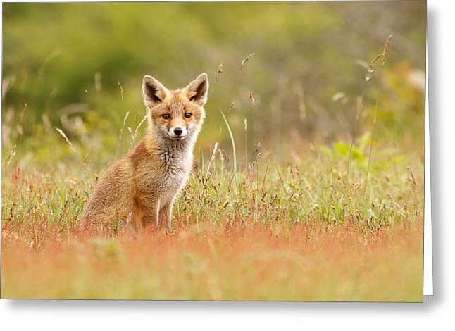 Red Fox Pup Greeting Cards - The Catcher in the Sorrel Greeting Card by Roeselien Raimond