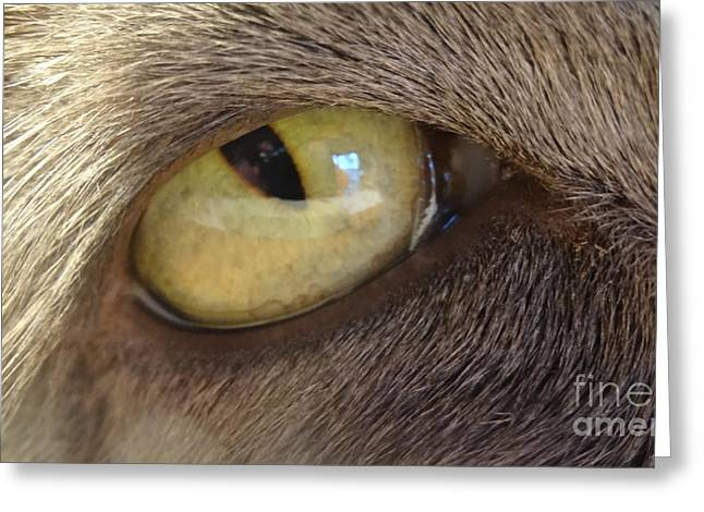 Justin Moore Greeting Cards - The Cats Eye Greeting Card by Justin Moore