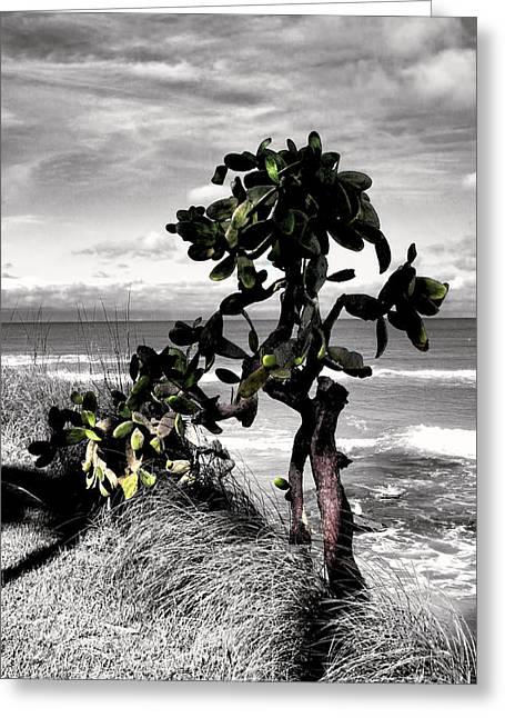 Forida Greeting Cards - The Catus Tree Siesta Key Florida Greeting Card by Tom Prendergast