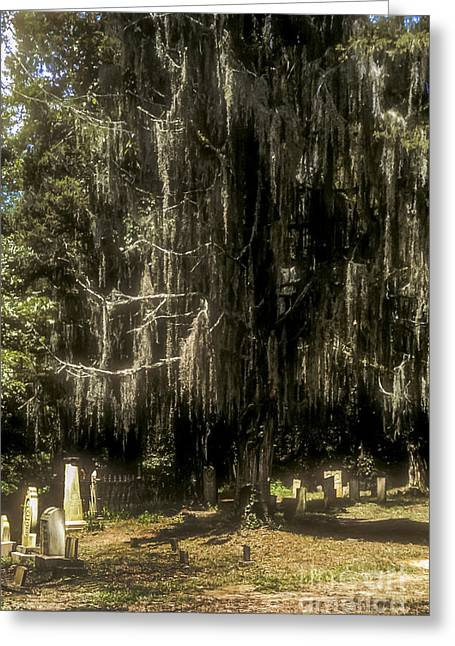 Natchez Trace Parkway Greeting Cards - The Cemetery at Rocky Springs Church Greeting Card by Bob Phillips