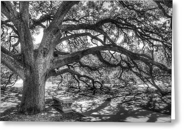 Live Art Greeting Cards - The Century Oak Greeting Card by Scott Norris