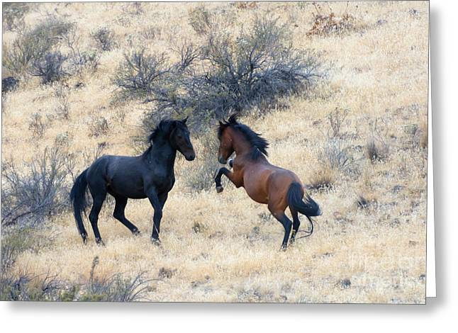 Wild Horse Greeting Cards - The Challenge Greeting Card by Mike  Dawson