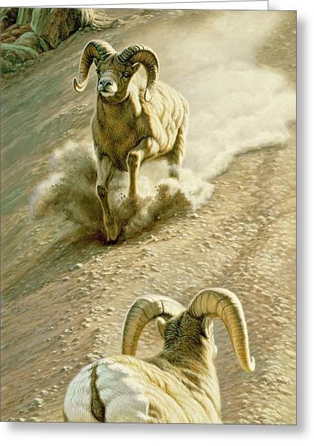 Bighorn Greeting Cards - The Challenge Greeting Card by Paul Krapf