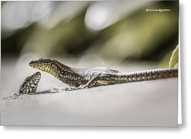 Amateur Photographer Greeting Cards - The charming lizards Greeting Card by Stwayne Keubrick