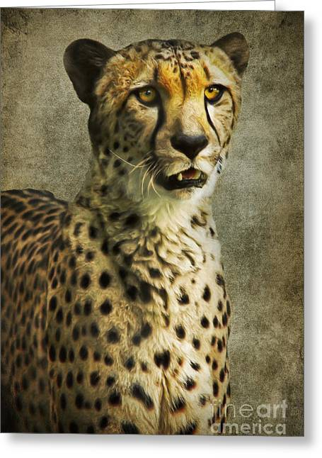 Mammal Mixed Media Greeting Cards - The Cheetah Greeting Card by Angela Doelling AD DESIGN Photo and PhotoArt