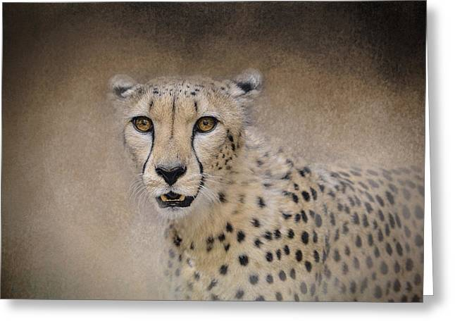 Acinonyx Greeting Cards - The Cheetah - Wildlife - Jai Johnson Greeting Card by Jai Johnson