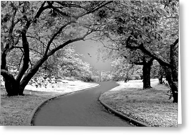 Orchard Greeting Cards - The Cherry Orchard Infrared Greeting Card by Jessica Jenney