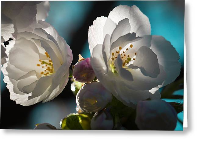 Disambiguation Greeting Cards - The Cherry Tree Greeting Card by David Patterson