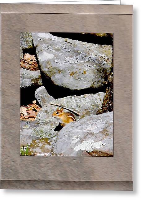The Chipmunk Greeting Card by Patricia Keller