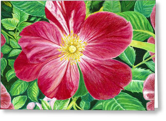 Eden Pastels Greeting Cards - The Christmas Rose Greeting Card by Donna Yates