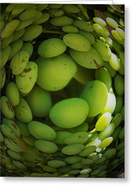 Bunch Of Grapes Greeting Cards - The circle of grapes Greeting Card by John Stuart Webbstock