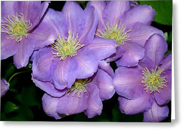 Best Flower Images Greeting Cards - The Clematis Gang Greeting Card by Sarah OToole