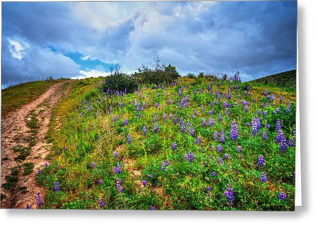 Ventura California Greeting Cards - The Climb Up Lupine Hill Greeting Card by Lynn Bauer