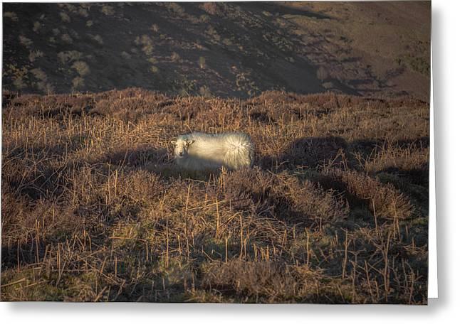 The Cloud Sheep Greeting Card by Chris Fletcher