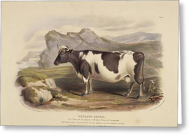 The Clydeside Breed Greeting Card by British Library