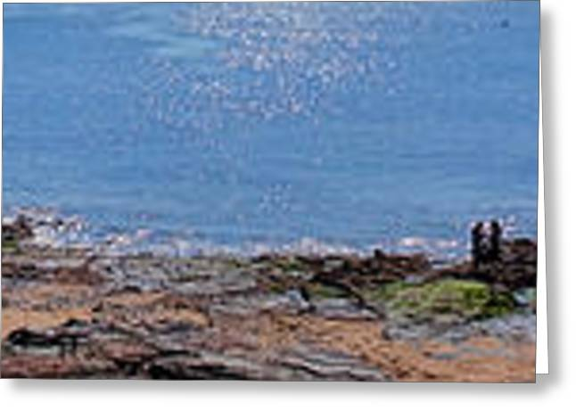 Sunbathing Greeting Cards - The Coast of Vendee Panoramic Greeting Card by Olivier Le Queinec