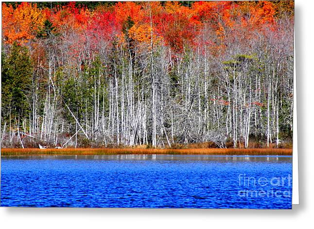 Arie Arik Chen Greeting Cards - The color of nature Greeting Card by Arie Arik Chen