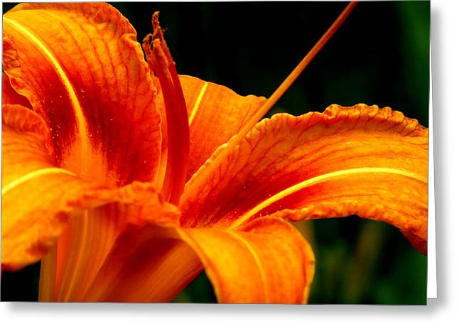 Day Lilly Greeting Cards - The color Orange Greeting Card by Kathleen Heseltine