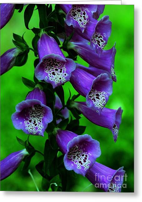 Struckle Greeting Cards - The Color Purple Greeting Card by Kathleen Struckle