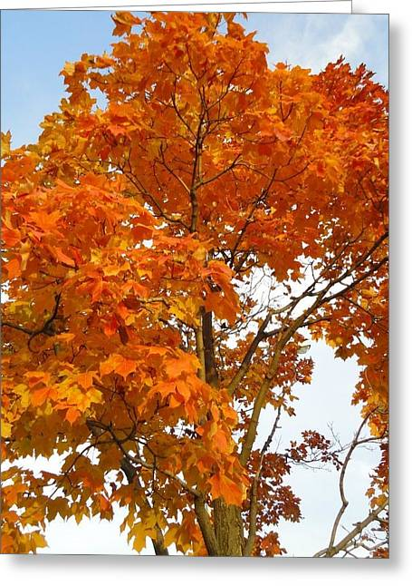 The Colors Brought To Autumn Greeting Card by Guy Ricketts
