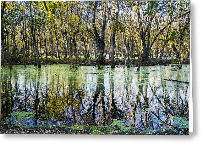 Autumn Colors Greeting Cards - The colors of alligator swamp Greeting Card by Ellie Teramoto