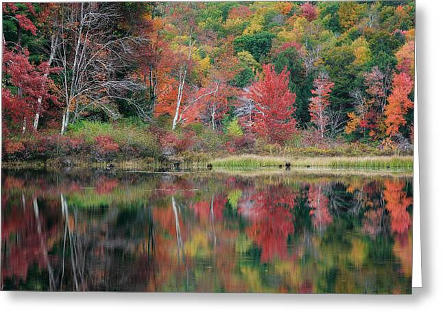 The Colors Of Autumn Greeting Card by Bill Wakeley