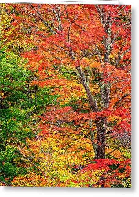 Foliage In White Mountains Greeting Cards - The Colors Of Autumn Greeting Card by Jeff Sinon
