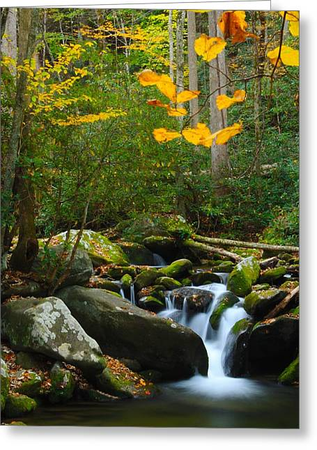 Gatlinburg Tennessee Greeting Cards - The Colors of Autumn Greeting Card by Nunweiler Photography