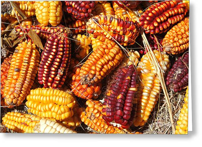 The Colours Of Maize Greeting Card by James Brunker