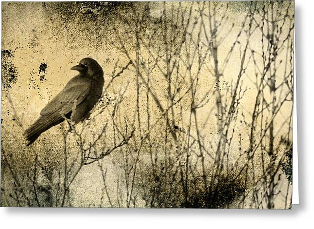 Crows In Trees Greeting Cards - The Common Crow Greeting Card by Gothicolors Donna Snyder