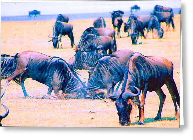 Wilderbeast Greeting Cards - The Conflict Greeting Card by Joseph Wiegand