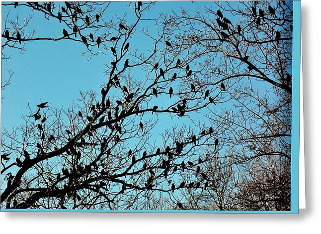 Bird Congregation Greeting Cards - The Congregation Greeting Card by Deborah  Crew-Johnson