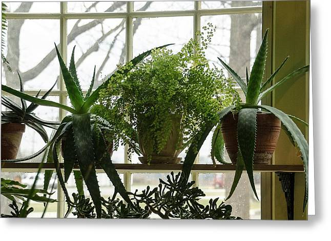 The Conservatory At Limberlost Greeting Card by Maria Suhr
