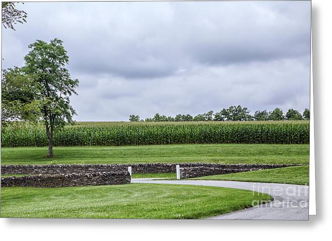 Cornfield Greeting Cards - The Cornfield Greeting Card by Kay Pickens