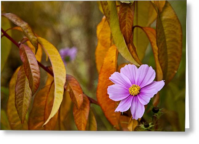 Autumn Prints Greeting Cards - The Cosmos In The Peach Tree Greeting Card by Theresa Tahara