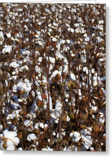 Harvestime Greeting Cards - The Cotton Buzz in Alabama Greeting Card by Kathy Clark