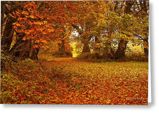 Red Fallen Leave Photographs Greeting Cards - The Covered Path Greeting Card by Cassius Johnson