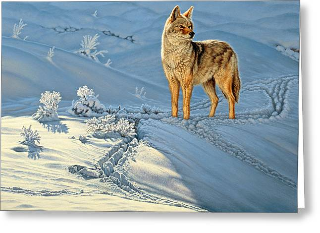 Coyote Greeting Cards - the Coyote - Gods Dog Greeting Card by Paul Krapf