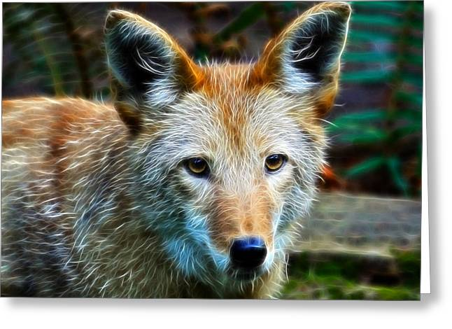 Preditor Greeting Cards - The Coyote Greeting Card by Steve McKinzie