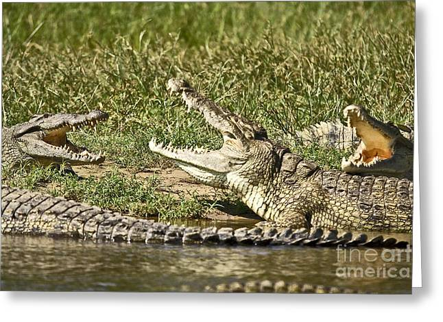 Safari Greeting Cards - The Crocodile Bar Greeting Card by Liz Leyden