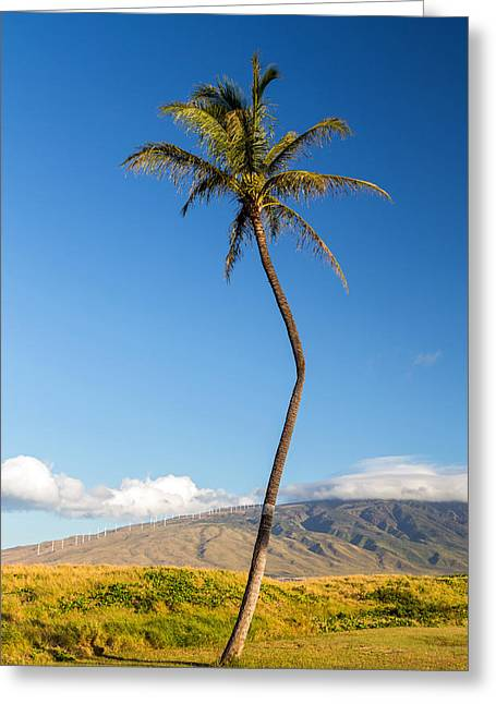 Village By The Sea Greeting Cards - The Crooked Palm Tree Greeting Card by Pierre Leclerc Photography