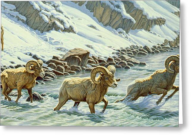 Yellowstone Greeting Cards - The Crossing - bighorn Greeting Card by Paul Krapf