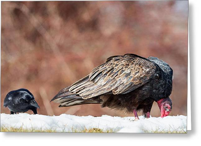 The Crow And Vulture Greeting Card by Bill Wakeley