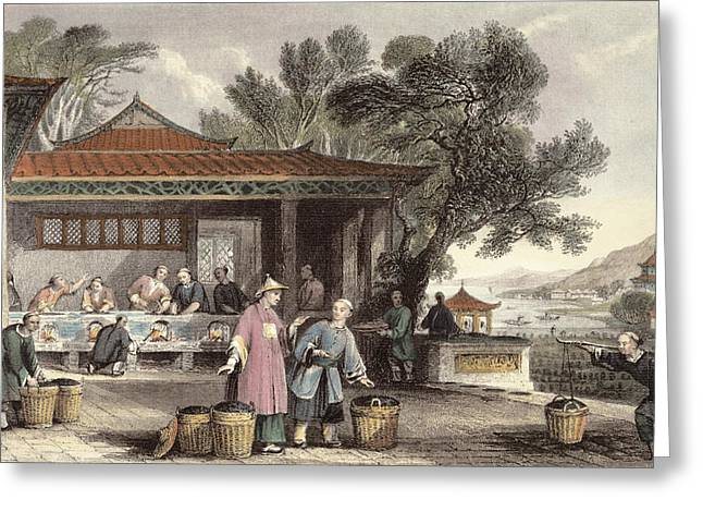 Kiln Greeting Cards - The Culture And Preparation Of Tea Greeting Card by Thomas Allom